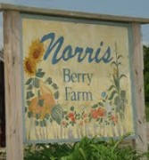 Norris Berry Farm
